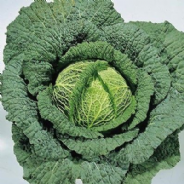 Cabbage Ormskirk (Savoy) - 1000 seeds
